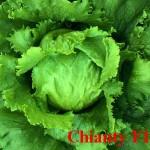 Chianty F1